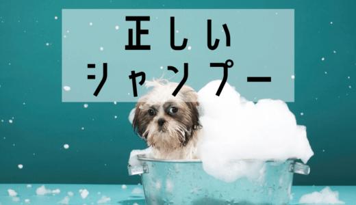 【動画】正しいシャンプーの仕方を解説・間違った方法でシャンプーしてない?