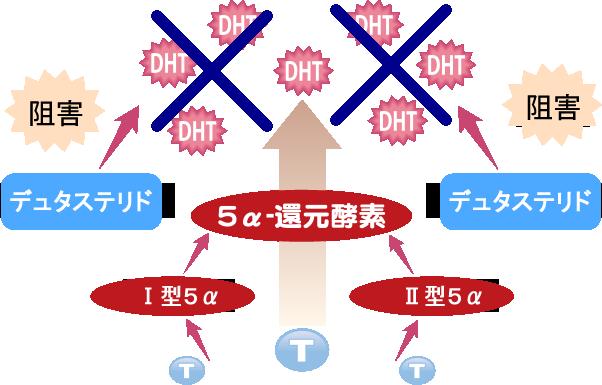 デュタステリドの効果イメージ