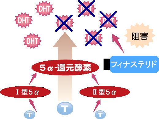 フィナステリドの効果イメージ